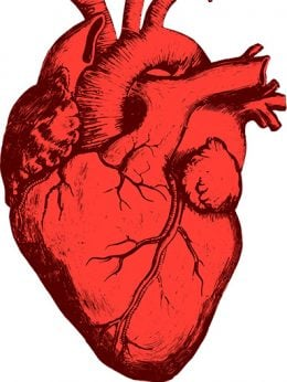 Image of human heart