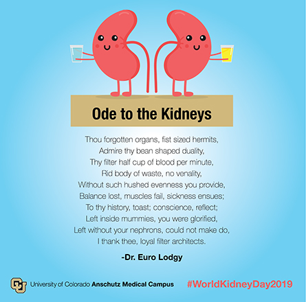 Ode to kidneys